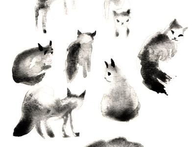Cats Study drawing painting graphite watercolour vodka study cat cats
