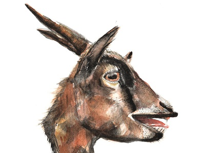 Salivating Goat graphite painting drawing portrait watercolour goat salivating