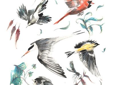 Birdwatching dragonfly bluebird tern finch bluejay cardinal bird birds birdwatching