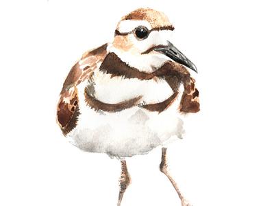 Killdeer handmade painting watercolour bird killdeer
