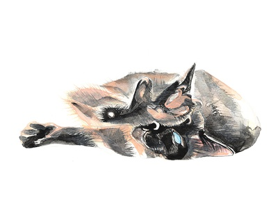 Siamese will cut you. handpainted aquarelle watercolor watercolour animal scratch cute cats cat meezer siamese