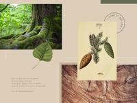 Moodboard #3 : Forest Breath