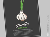 Garlic Illustration