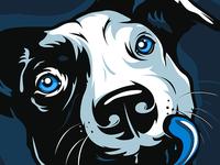 American Pitbull dog face