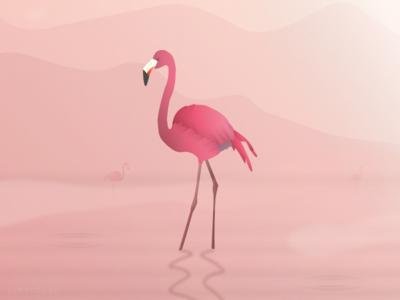 Bird Of Paradise 4