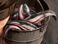 "Illustration Detail Shot - ""Fish bucket"""