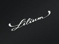 Lilium sketch