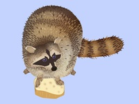 Raccoon Dribbble 3