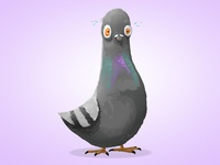 Pigeon Character