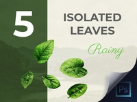 Perfectly Isolated Leaves PSD