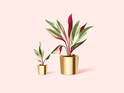 Christmas Calatheas connection connect bird robin plants plant triostar calathea