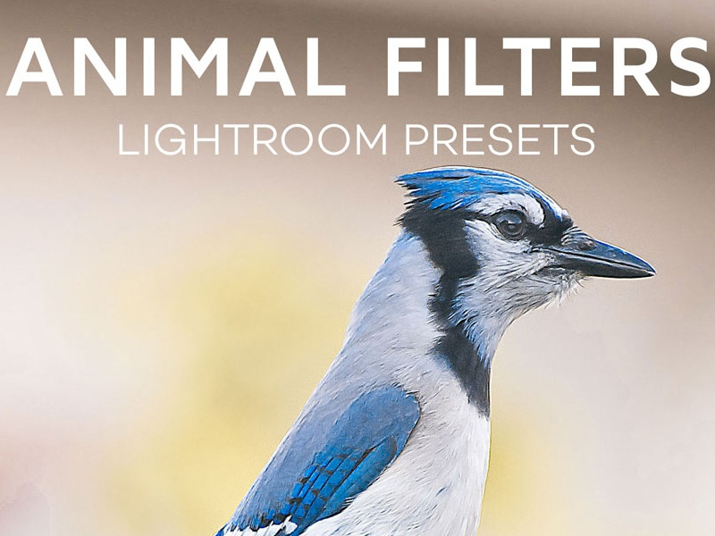 Free Animal Photography Lightroom Camera Raw Presets hdr presets glow filter mixed presets photoshop filter cc action photoshop action matte lightroom presets matte filter animal lightroom presets animal filter