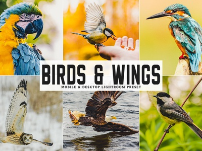 Free Birds & Wings Mobile & Desktop Lightroom Preset