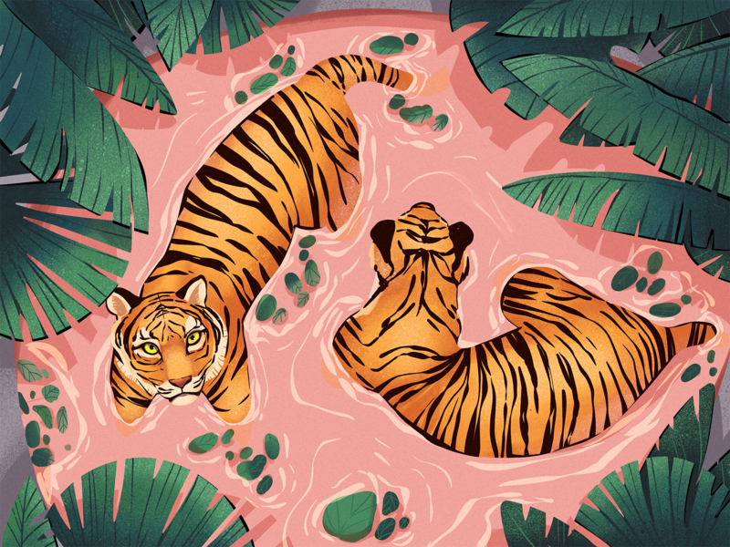 Relaxing Tigers Illustration relax digital artwork illustrations nature illustration big cats nature wildlife illustration wildlife animals tigers procreate illustration art digital painting digital illustration illustrator design studio illustration graphic design digital art design