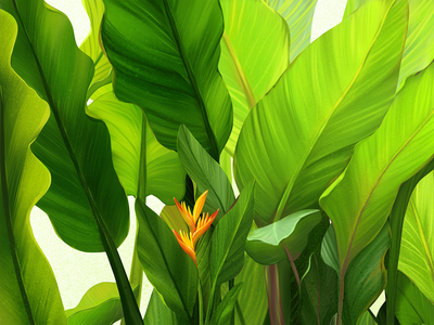 Green Vibes Illustration flower illustration plants nature green leaves exotic thailand blossom flower greenery procreate illustration art digital painting digital illustration illustrator design studio illustration graphic design digital art design