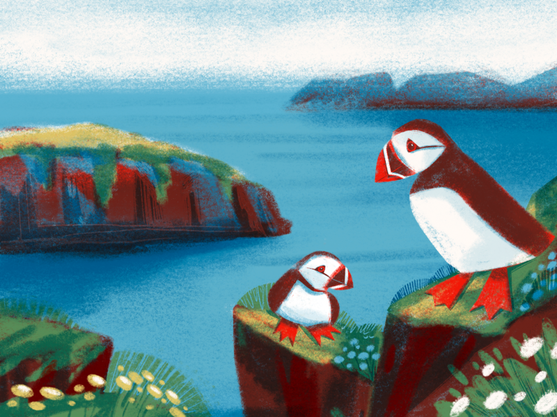 Lovely Puffins Illustration digital artist digital artwork bird illustration nature landscape birds animal bird puffin illustrations procreate illustration art digital painting digital illustration illustrator design studio illustration graphic design digital art design