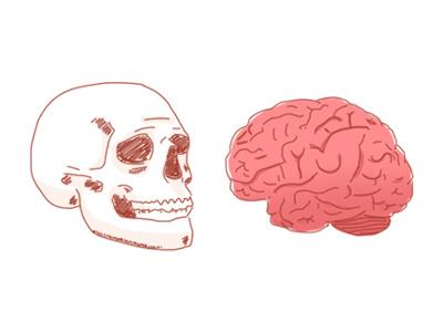 Bodyparts 2 human illustration brain skull bodyparts body