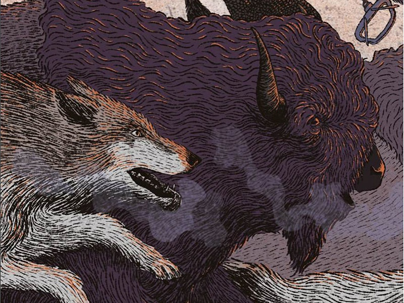Buffalo Wolf illustration wolf buffalo bison plains prairies history fur trade