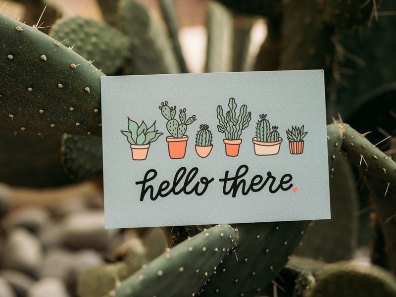Hello There Postcard hand drawn plants product photography illustration cactus succulent hello there hand lettered hand lettering postcard