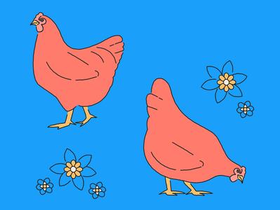 Chicken spring flowers bird hens chicken animal line illustration plant flat design art vector illustration
