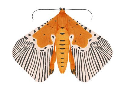 Peridrome Orbicularis digital art bug butterfly moth insect illustration