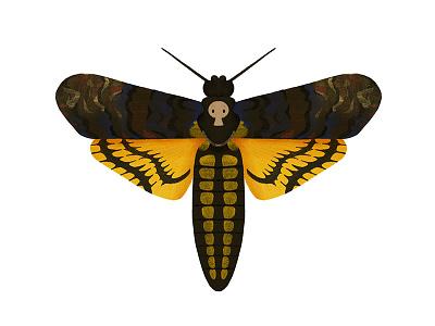 Deaths Head Moth moth insect illustration digital art butterfly bug