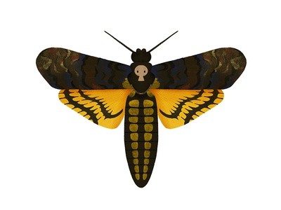 Deaths Head Moth moth insect illustration digital art butterfly bug