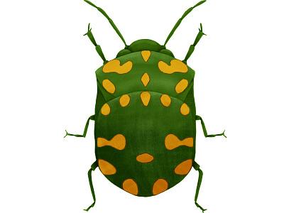 Green Beetle ipad pro beetle illustration insect bug digital art