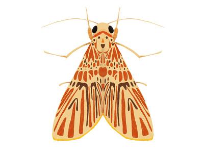 Barsine orientalis bigamica moth ipad pro insect bug illustration digital art