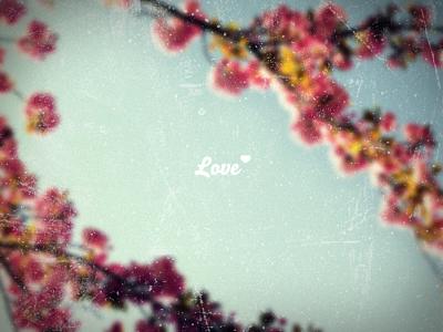 Love ♥ love flower photography typography photo typho heart warm