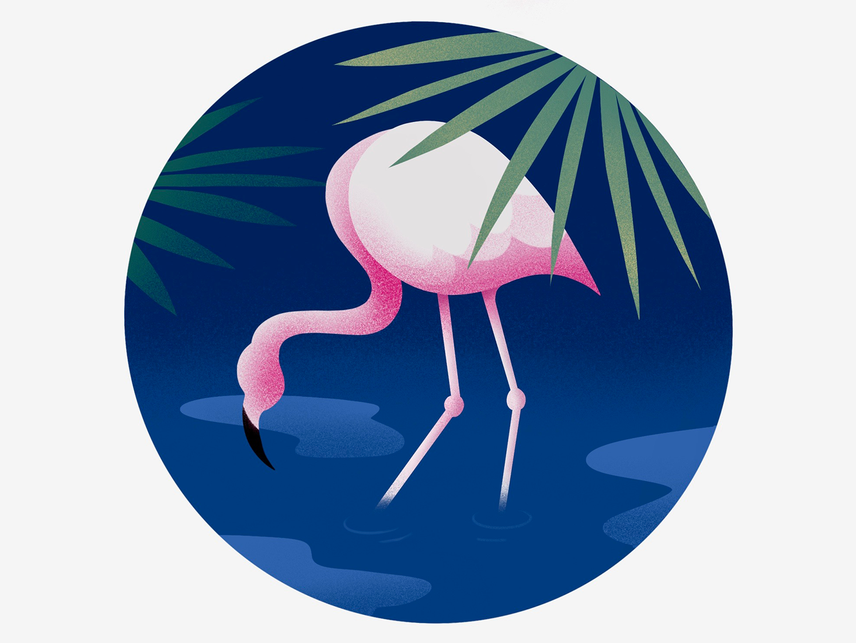 Flamingo ipadproart procreate flat firstshot design illustration