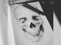 Skull (Drawing) - Final