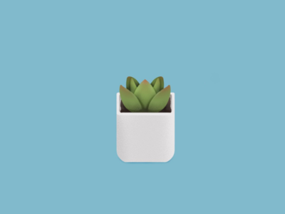 Succulent plant illustration
