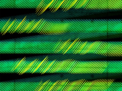 Enigma pattern art green pattern design lines pattern illustration enigma