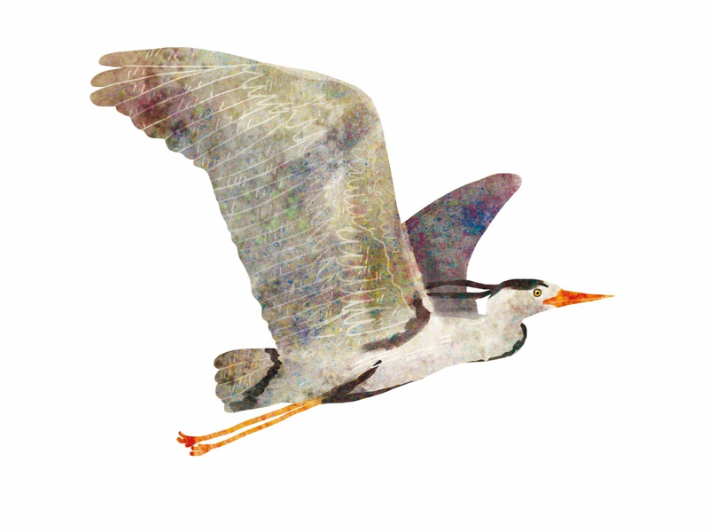 grey heron non fiction nature bird cute illustration
