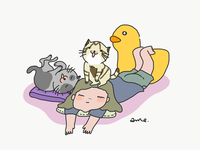 Cat is all around