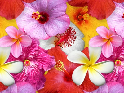 hawaii flower power by we are social  dribbble, Beautiful flower