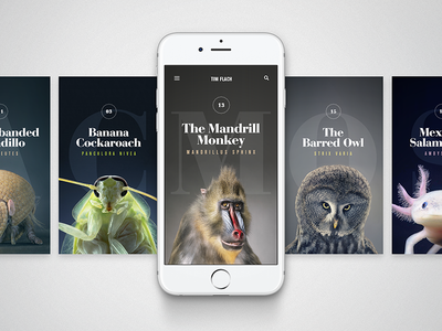 Animals - Mobile photography nav layout landing home typography cards ux ios mobile ui
