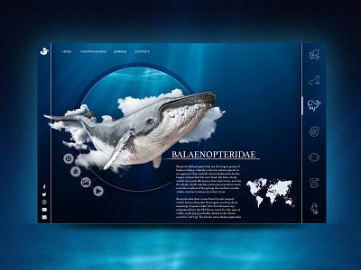 Landing whale layout landing web uidesign ui