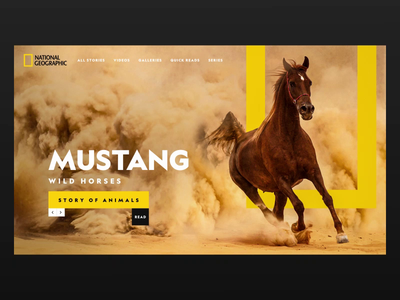 National Geographic - Story of Animals Web Re-Design