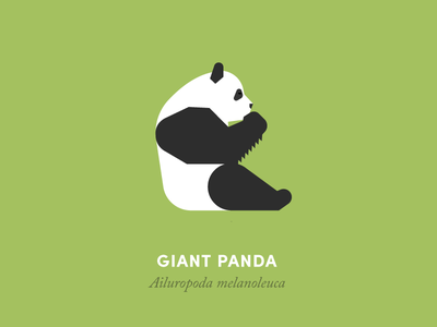 The 100 Day Project: Giant Panda animal animals illustration geometry design minimal minimalism grid animal kingdom wildlife nature