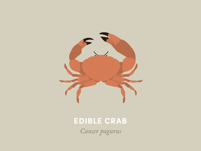 Edible Crab  animal illustration geometry design minimal minimalism animal kingdom wildlife nature seaside beach crab