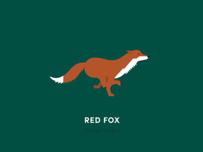 The 100 Day Project: Fox Dribbble fox animal animals illustration geometry design minimal minimalism animal kingdom wildlife nature