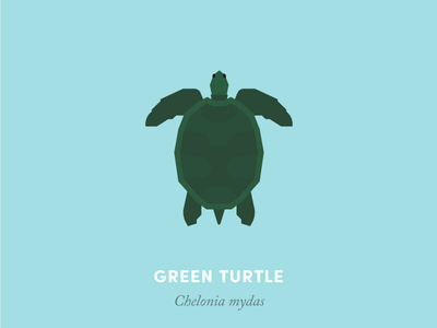Green sea turtle animal kingdom wildlife nature turtle sea animal reptile illustration geometry design minimal minimalism