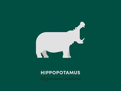 Hippopotamus hippo hippopotamus mammal animal kingdom wildlife nature animal illustration minimal design
