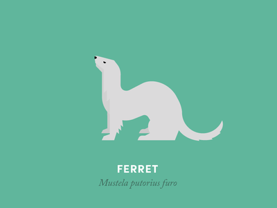Ferret  ferret animal illustration geometry design minimal minimalism animal kingdom wildlife nature
