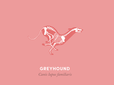 Anatomy of a greyhound anatomy animal illustration design diagram running greyhound dog
