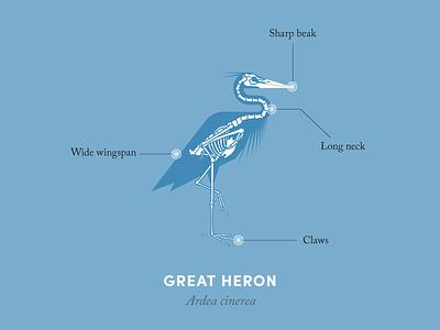 Anatomy of a heron anatomy animal illustration design diagram heron bird nature anatomical diagram