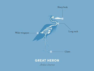 Anatomy of a heron