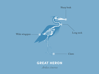 Anatomy of a heron